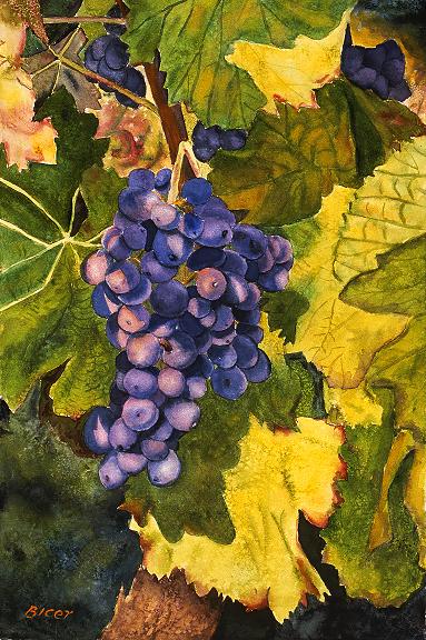 Grapes IV