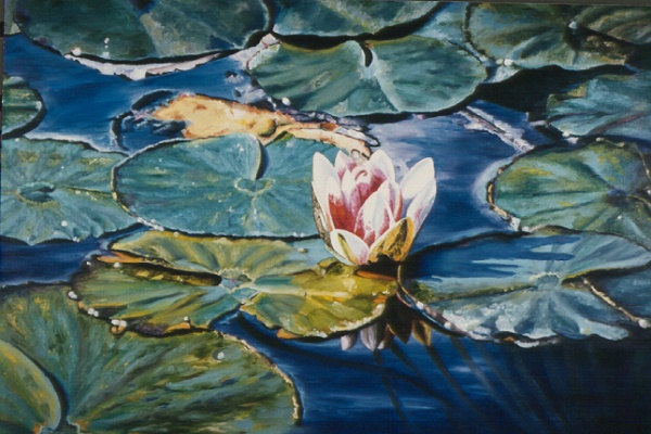 Waterlili